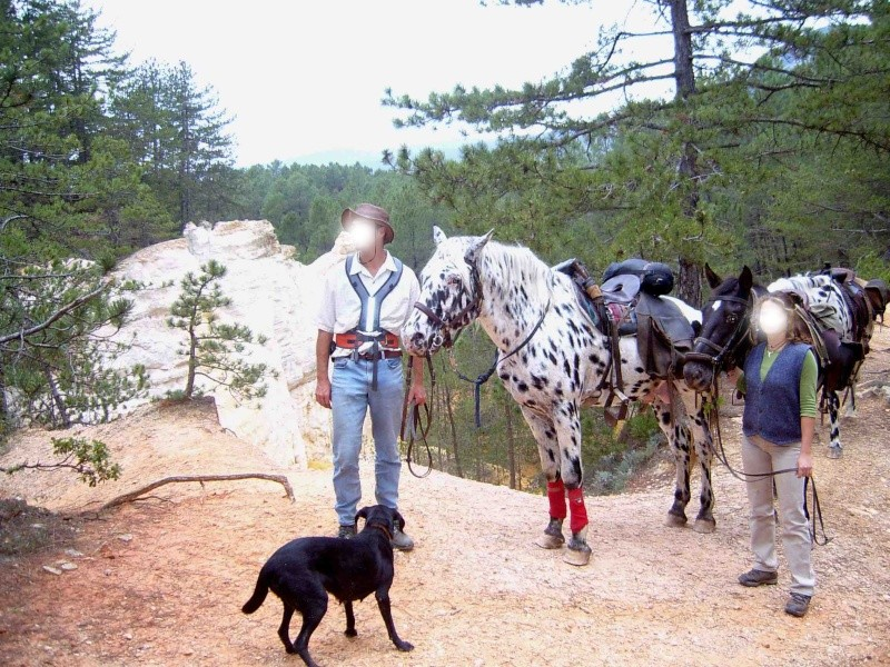 Apache, etalon appaloosa, nouvelles photos ! - Page 3 Sverin10
