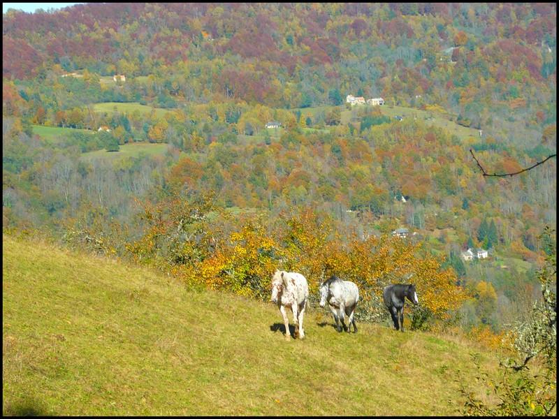 Au couleur de l'automne... Trio11