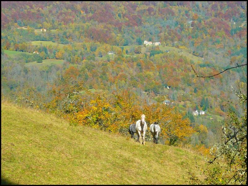 Au couleur de l'automne... Triobi10