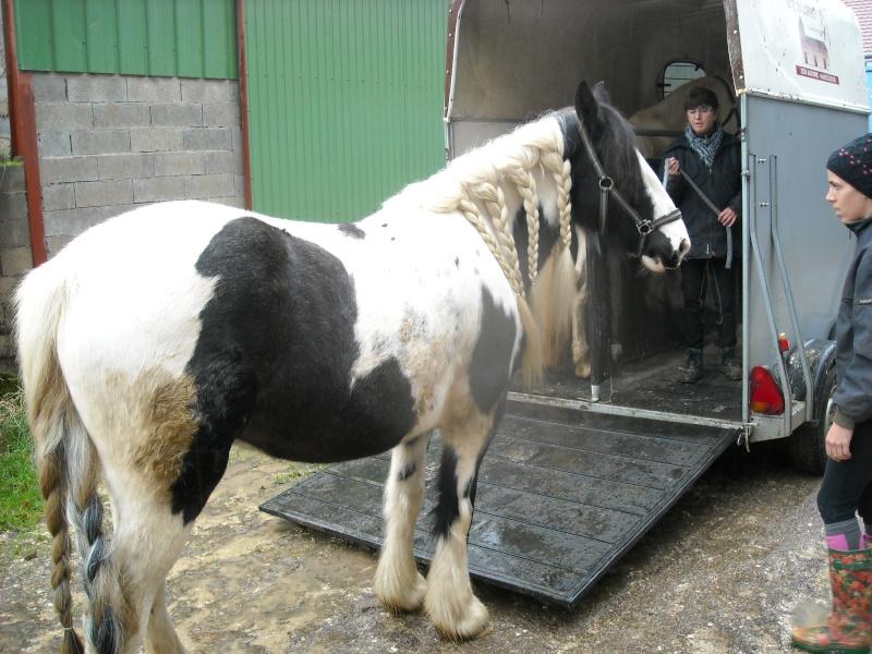 Méthode pour monter un cheval réticent dans le van - Page 3 Dscn0011