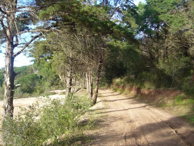 """Odivelas - Vialonga  - """"caminhos de Fátima"""" P1050031"""