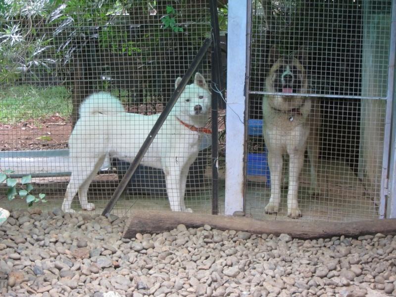 26e Portée de Ludsyga : Yuki x Nato (09/07/13) - pour les maitres de Yuki 2013-489
