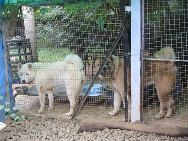 26e Portée de Ludsyga : Yuki x Nato (09/07/13) - pour les maitres de Yuki 2013-539