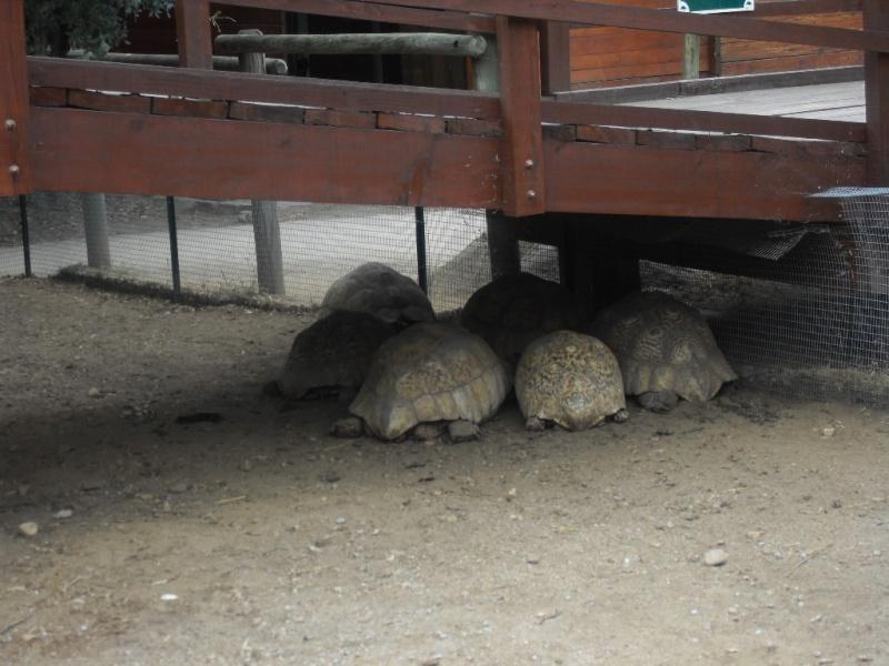 Je m'ennuie de mes tortues !!! Sdc12027