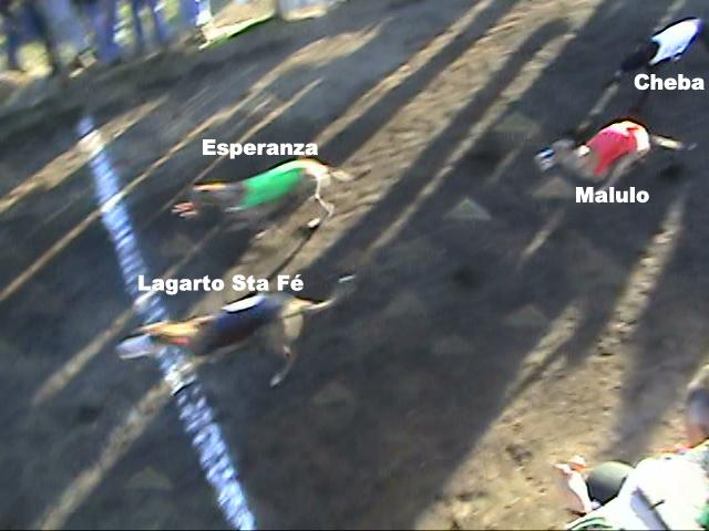 Grandes carreras y clásicos en Chillán para este domingo 27 Mauric11