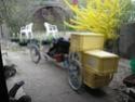 Postez vos vélos de transport ! P1010113