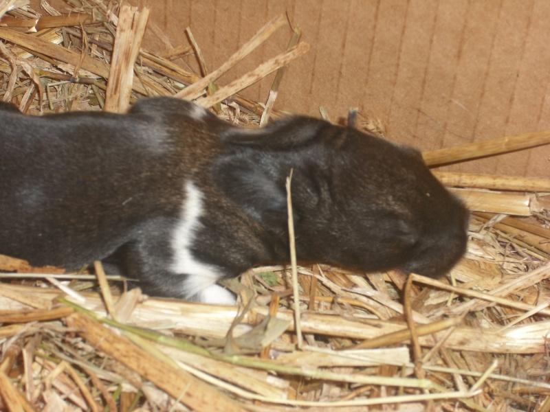 Mignon petit lapin Dscf0179