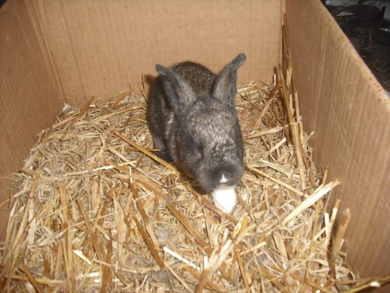 Mignon petit lapin Dscf0205
