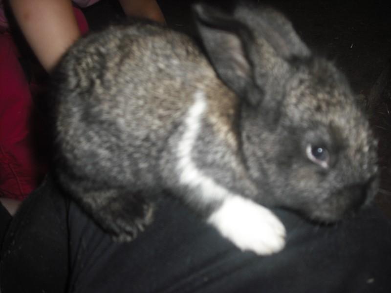 Mignon petit lapin Dscf0206