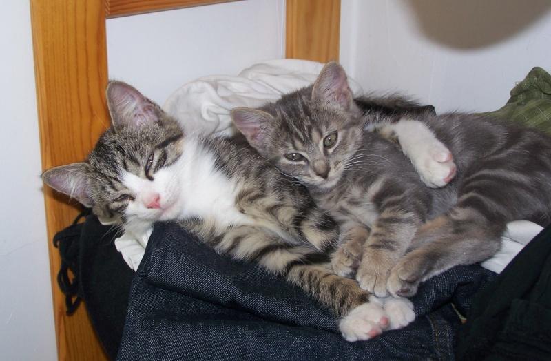mes chatons... Chaton10