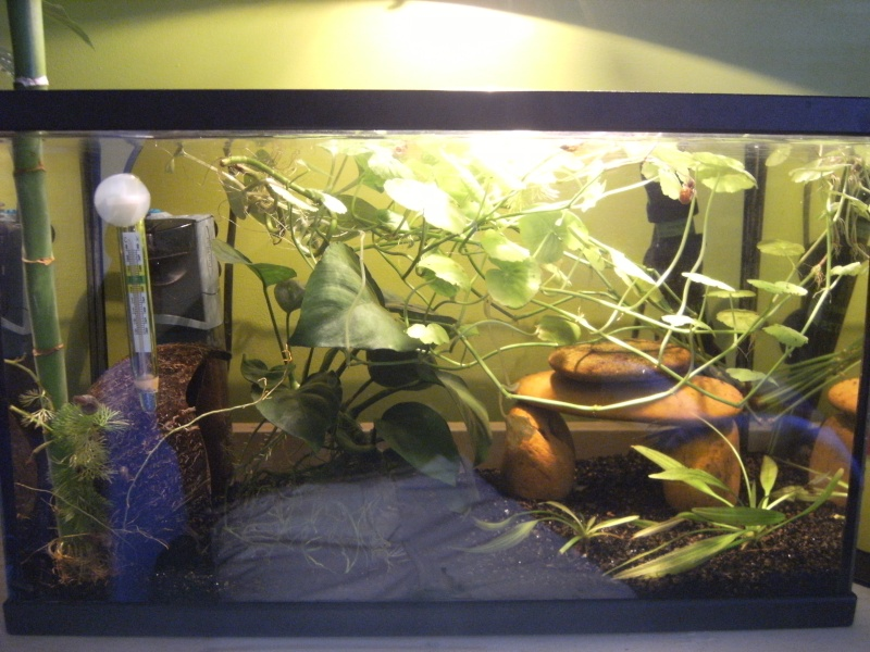 "Et ""Vos aquariums"", c'est ici ? =P Dscf0155"