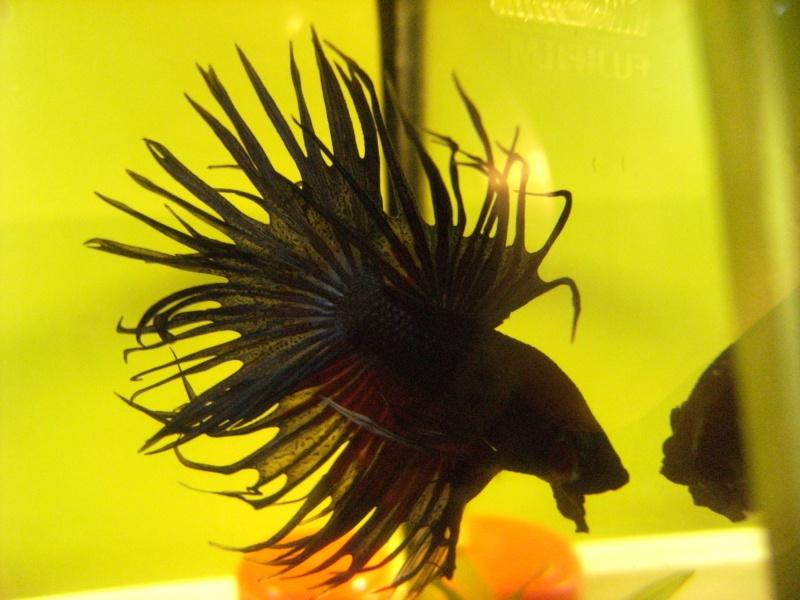 "Et ""Vos aquariums"", c'est ici ? =P Dscf0160"