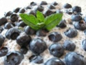 pouding chia et petits fruits Vanill10