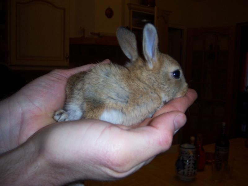 """Petits pains """"lapins de Pâques"""" concours du 31 mars au 19 avril Photos16"""