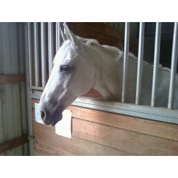 This is the horse i am leasing this month! 210