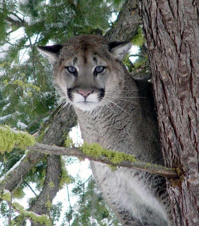 Sweet Serenity Cougar10