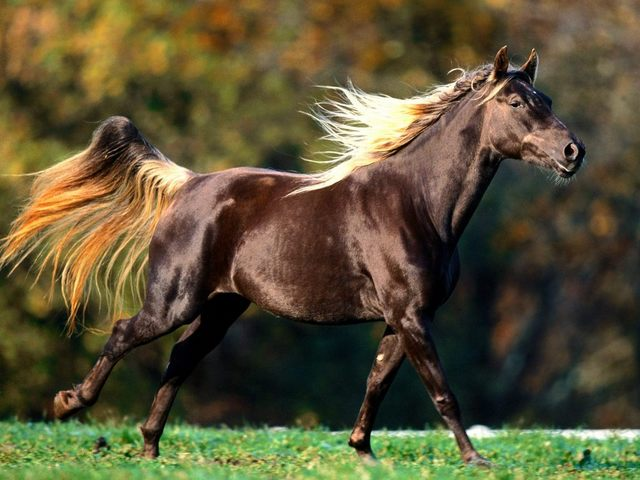 Strawbrry's first foal Ranmar12