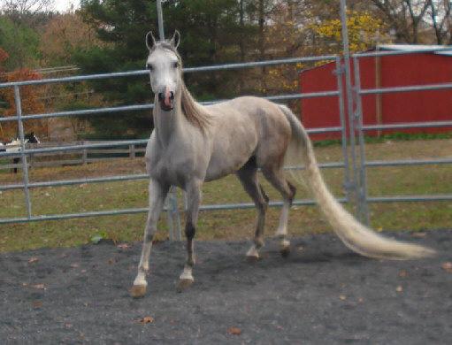 A beautiful horse comes seeking a home Rtobia23
