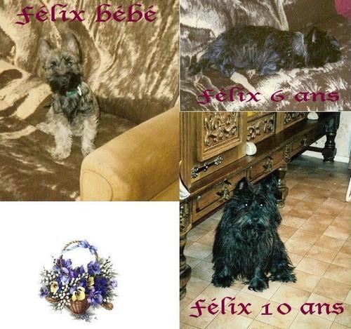 Bonjour ! Falix_10