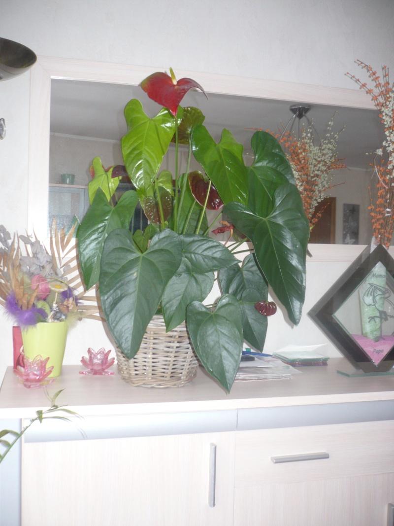 une jolie plante mais je n en connais pas son nom P1020314