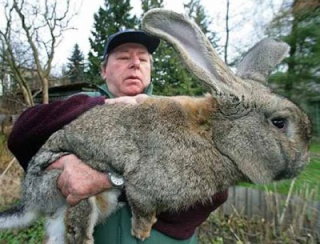 Le lapin vindict 3_lapi11