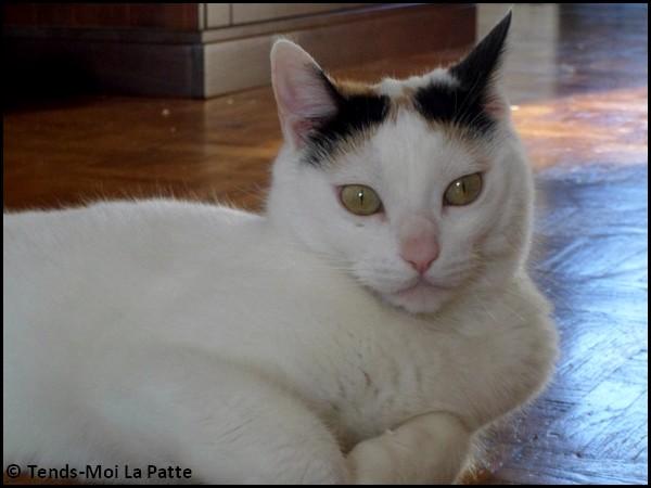 MAYA femelle blanche avec tâches brunes 9 ans Maya10