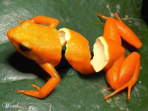 Selling Avi's (Dr.Octagonapus) Orange10