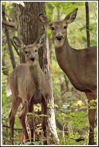 Belles photos d'animaux sauvages - Page 35 07081210