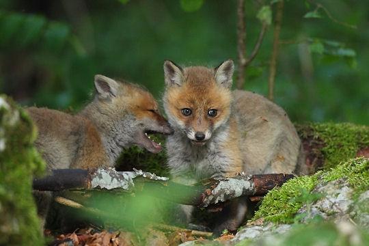 Belles photos d'animaux sauvages - Page 35 Fables10