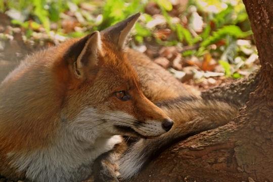 Belles photos d'animaux sauvages - Page 35 Veneri10