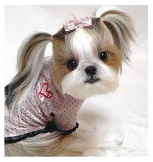 เก็บมาฝากคนรักสุนัข Clip_210