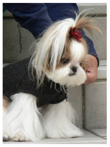 เก็บมาฝากคนรักสุนัข Clip_410