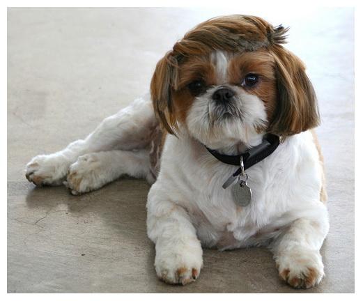 เก็บมาฝากคนรักสุนัข Clip_510