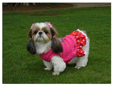 เก็บมาฝากคนรักสุนัข Clip_610