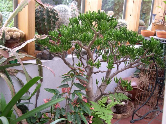 Terrasse aux succulents en cette fin septembre Dscn3513