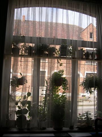 je n'ai pas d'arbre mais bien une fenêtre!! Dscn5122