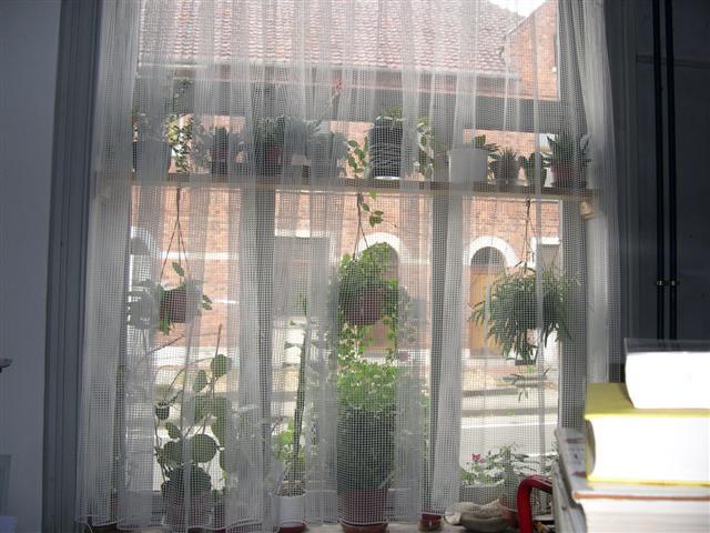 je n'ai pas d'arbre mais bien une fenêtre!! Dscn5123