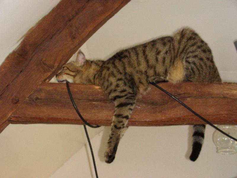 Agility cat vous connaissez ? Matiss10