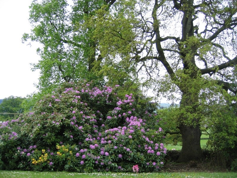 Inspirational Trees 00411