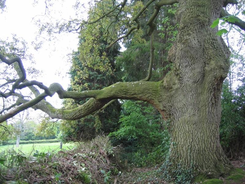 Inspirational Trees 01110
