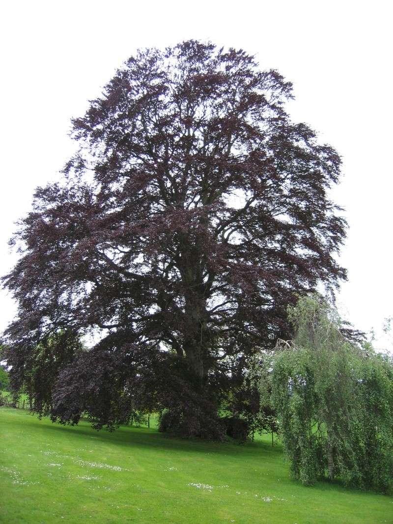 Inspirational Trees 01410