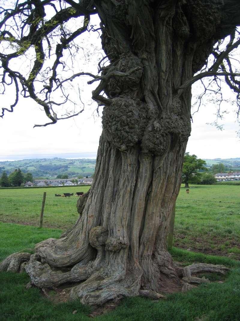 Inspirational Trees 01910