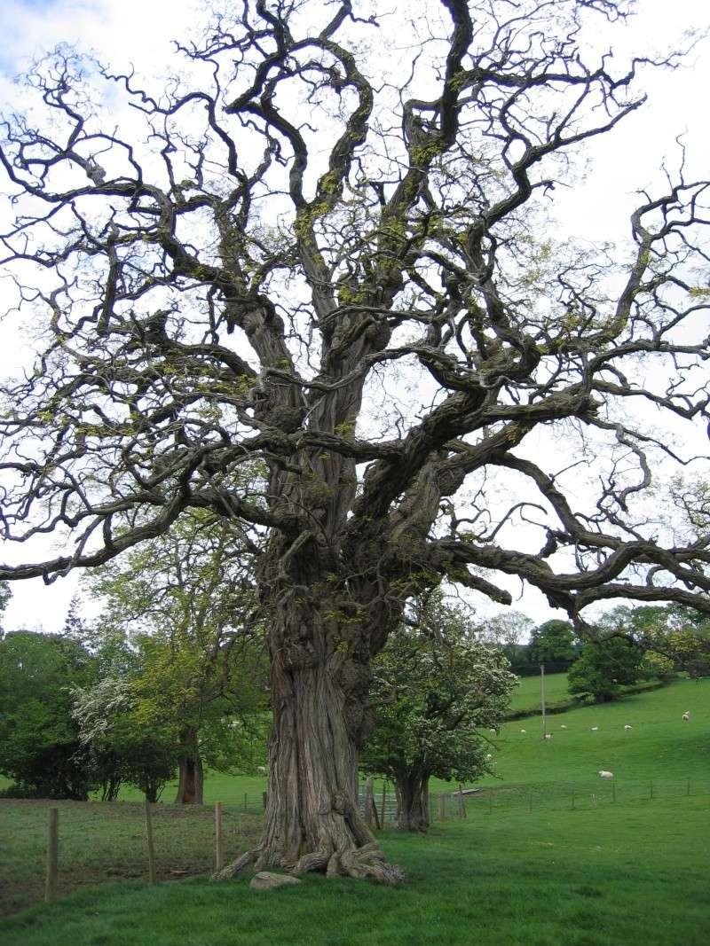 Inspirational Trees 02110