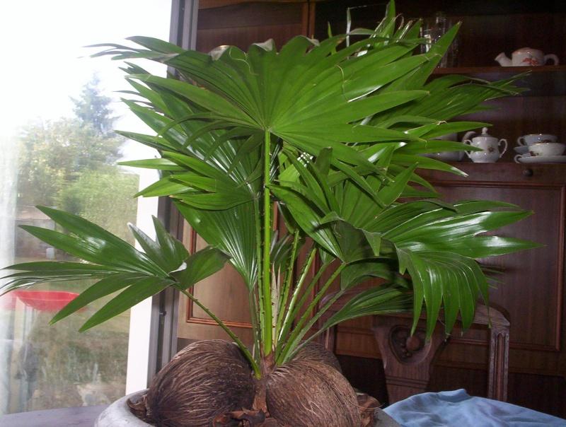 presentation des plantes de daturien... 101_2120
