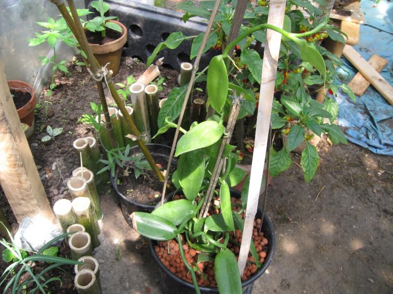 presentation des plantes de daturien... - Page 2 Img_0011