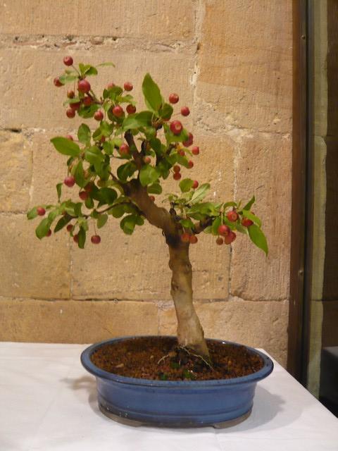 IV. Exposicion de Bonsai y Suiseki de Hondarribia Image029
