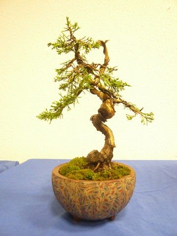 IV. Exposicion de Bonsai y Suiseki de Hondarribia Image030