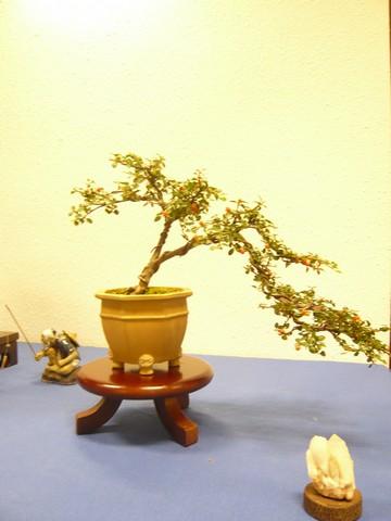 IV. Exposicion de Bonsai y Suiseki de Hondarribia Image031