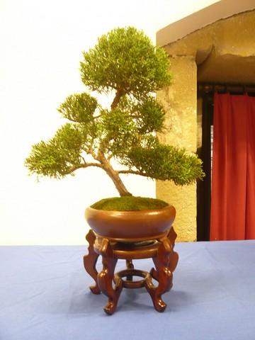 IV. Exposicion de Bonsai y Suiseki de Hondarribia Image033