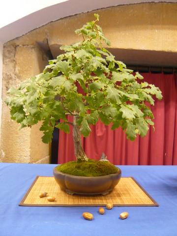 IV. Exposicion de Bonsai y Suiseki de Hondarribia Image035